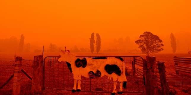Incendies: l'Australie évalue les dégâts après une des pires journées depuis le début de la crise