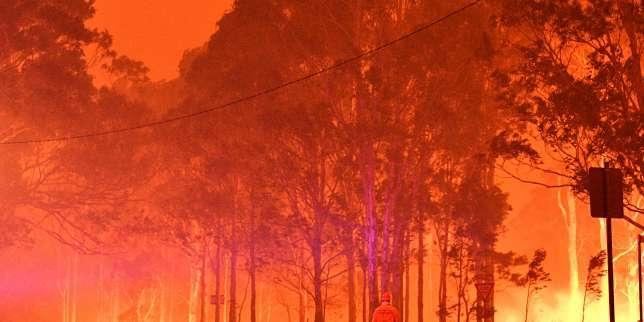 Les forêtsd'Australie pourront-elles se regénérer après les immenses incendies ?
