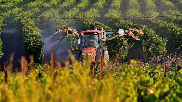 Réduction des pesticides en France : seul 1% des financements publics est réellement efficace, selon la Fondation Nicolas Hulot
